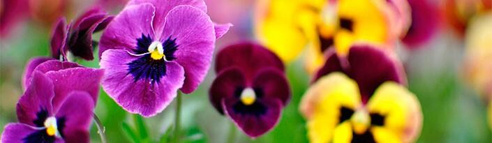 plantas de jardim lista:Comprar Sementes de Flores de todos os tipos na Toca do Verde!