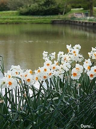 Narciso Branco
