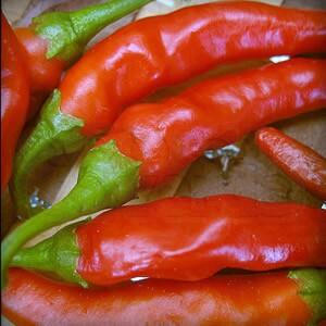 Pimenta de Cayenne (Capsicum frutescens) dedo de moça