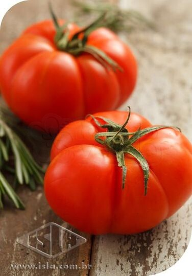 Tomate Marmande (Ref 283)