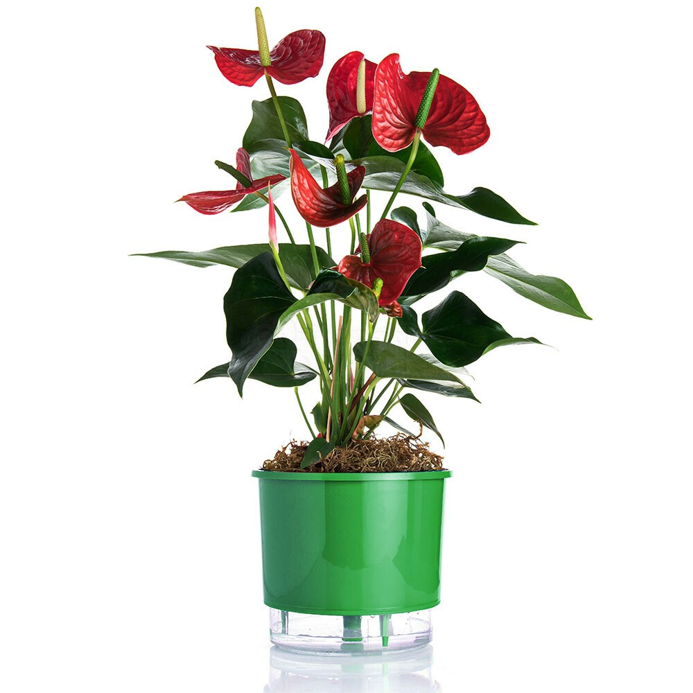 Vaso Autoirrigável Grande Raiz - Verde - 21,5cm x 19cm - N04