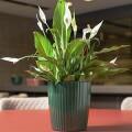 Vaso Groove G 22 alt x 20 cm - VG 400 - Cor Verde Botanic