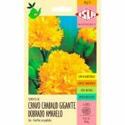 """Cravo """"Chabaud"""" Gigante Dobrado Amarelo (Ref 366)"""