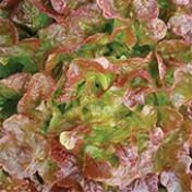 Alface Mimosa Prado 3g (Ref 924)