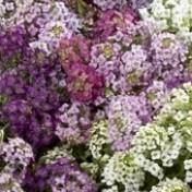 Flor-de-mel Mix
