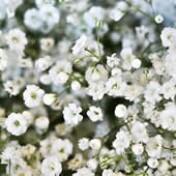 Mosquitinho Snowflake Dobrado Branco 0,2g (Ref 775)