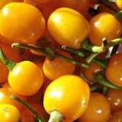 Pimenta Arari Bode Amarela 0,8g (Ref 971)
