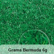 Grama Bermuda (Ref 502)