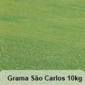 Grama São Carlos - 10kg
