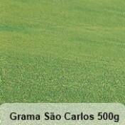 Grama São Carlos Folha Larga - 500g