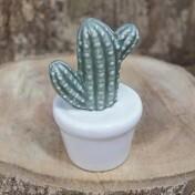 Hamatocactus em Vaso Decorativo Cerâmica - 9,2x5,4 cm - 41182
