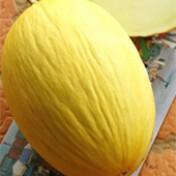 Melão Híbrido Favo - 50 sementes