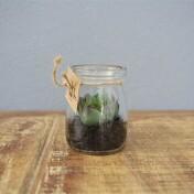 Mini Vaso Decorativo em Vidro - com Suculenta Artificial - Mahogany - 7x5.72 cm - 40912