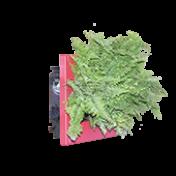 Quadro Verde -  17 X 17 Moldura Vermelha - WallFlower