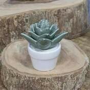 Suculenta Titubans em Vaso Decorativo de Cerâmica - 11,3x10 cm - 41179
