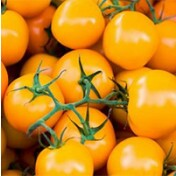 Tomate Catânia (Super Doce - Amarelo) (Ref 293) - 10 sementes