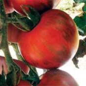 Tomate Tigre - 50 sementes