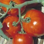 Tomate Rasteiro Rio Grande (Ref 265)