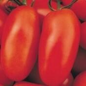 Tomate San Marzano (Ref 270)