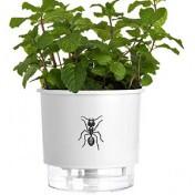 Vaso Autoirrigável Pequeno N02 12x11cm Branco Formiga - Jardim de Insetos