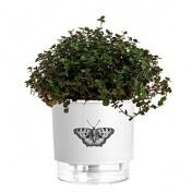 Vaso Autoirrigável Pequeno N02 12x11cm Branco Borboleta - Jardim de Insetos