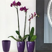 Vaso Orquídea 15x16cm - Roxo - Vasart