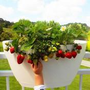 Greenbo XL Planter Grande - Vaso para Sacadas - Branco