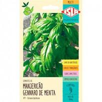 Manjericão Gennaro de Menta - (Ref 471)