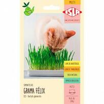 Grama Félix - Grama de Gato (Ref 523)