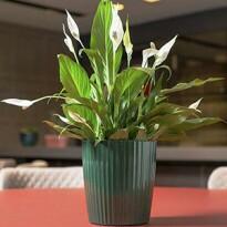 Vaso Groove G - VG 400 - Cor Verde Botanic - Ornamentação não inclusa