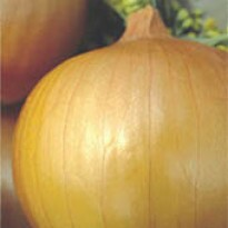 Cebola Híbrida Granex 2g (Ref 082)