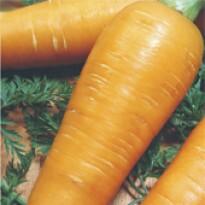 Cenoura Tropical - 50 g