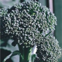 Couve-Brócoli Ramoso Santana 2g (Ref 109)