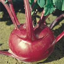 Couve-rábano Roxa (Ref 129)
