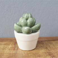 Echeveria Succulent Decorativa