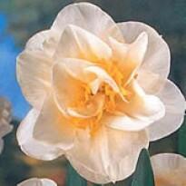 Narciso Dobrado