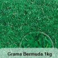 Grama Bermuda - 1kg
