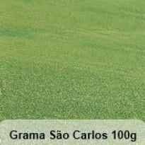 Grama São Carlos Folha Larga- 100g