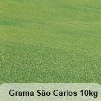 Grama São Carlos 10kg