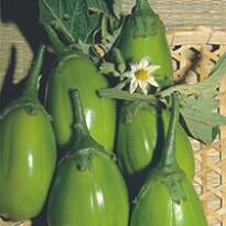 Jiló Tinguá Verde - Claro (Ref 160)