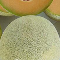 Melão Pingo de Mel - 50 sementes
