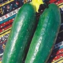 Pepino Verde Comprido (Ref 197)