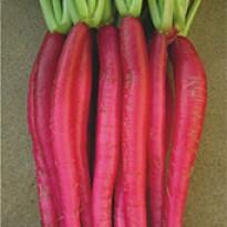 Rabanete Vermelho Comprido (Ref 225)