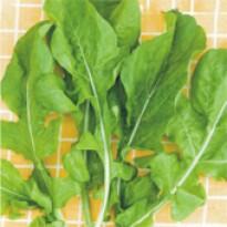 Rúcula Cultivada Antonella (Ref 255)