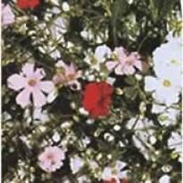 Mosquitinho Sortido (Ref 396)