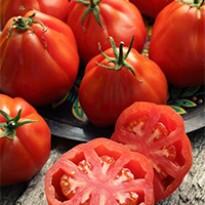 Tomate Coração-de-Boi (Ref 275)