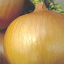 Cebola Híbrida Granex (Ref 82)