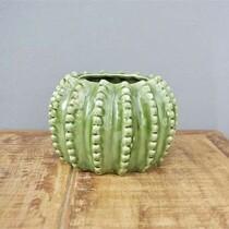 Vaso Barrel Cactus