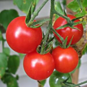 Tomate Cereja Vermelho
