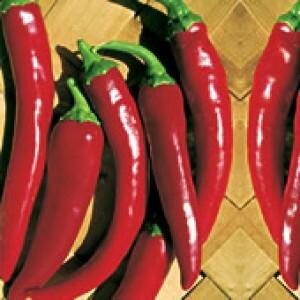 Pimenta Híbrida Grisu F1 - 0,1g (Ref 221)
